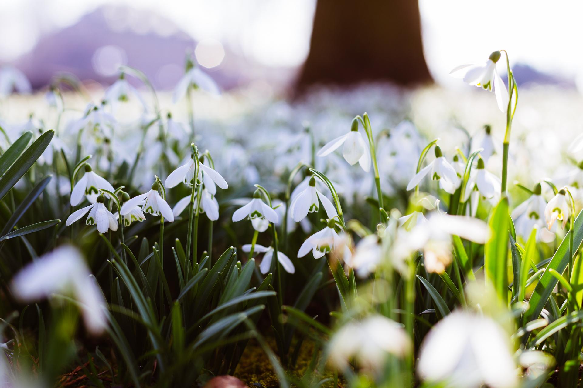 20150308_Spring-4
